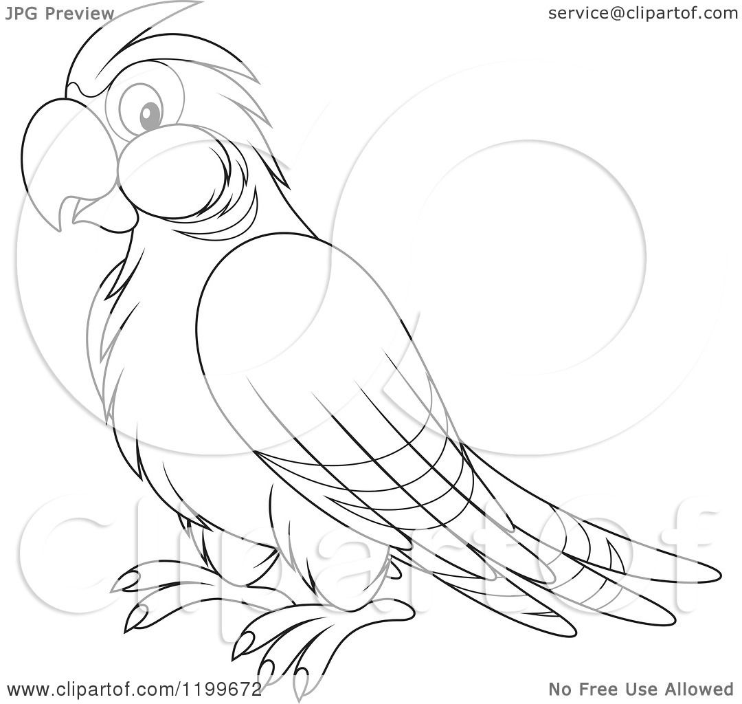 Cartoon Of A Black And White Cute Parrot
