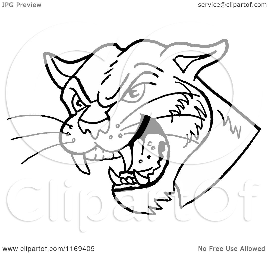 Cartoon Of A Black And White Hissing Cougar Head