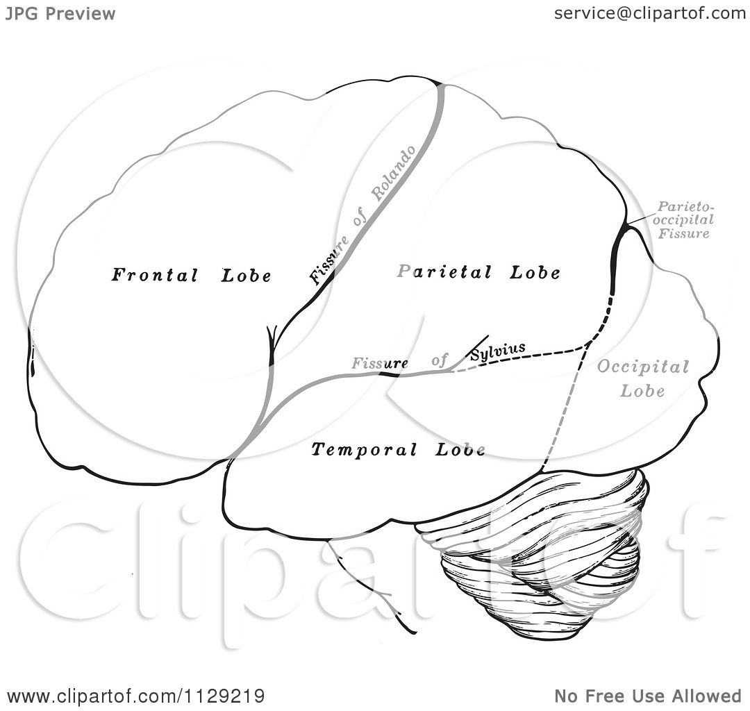 Retro Diagram Of The Hemispheres Of The Human Brain