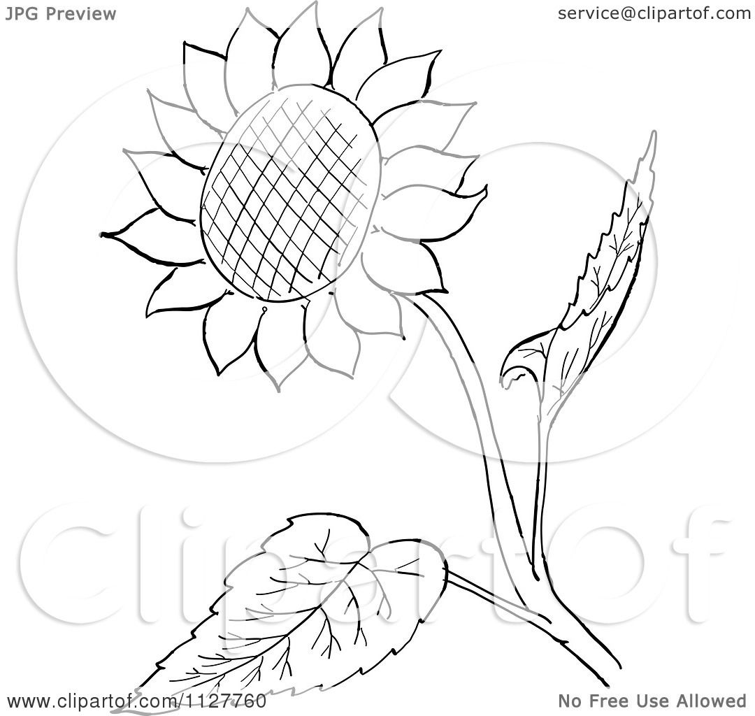 Stem And Leaf Clipart