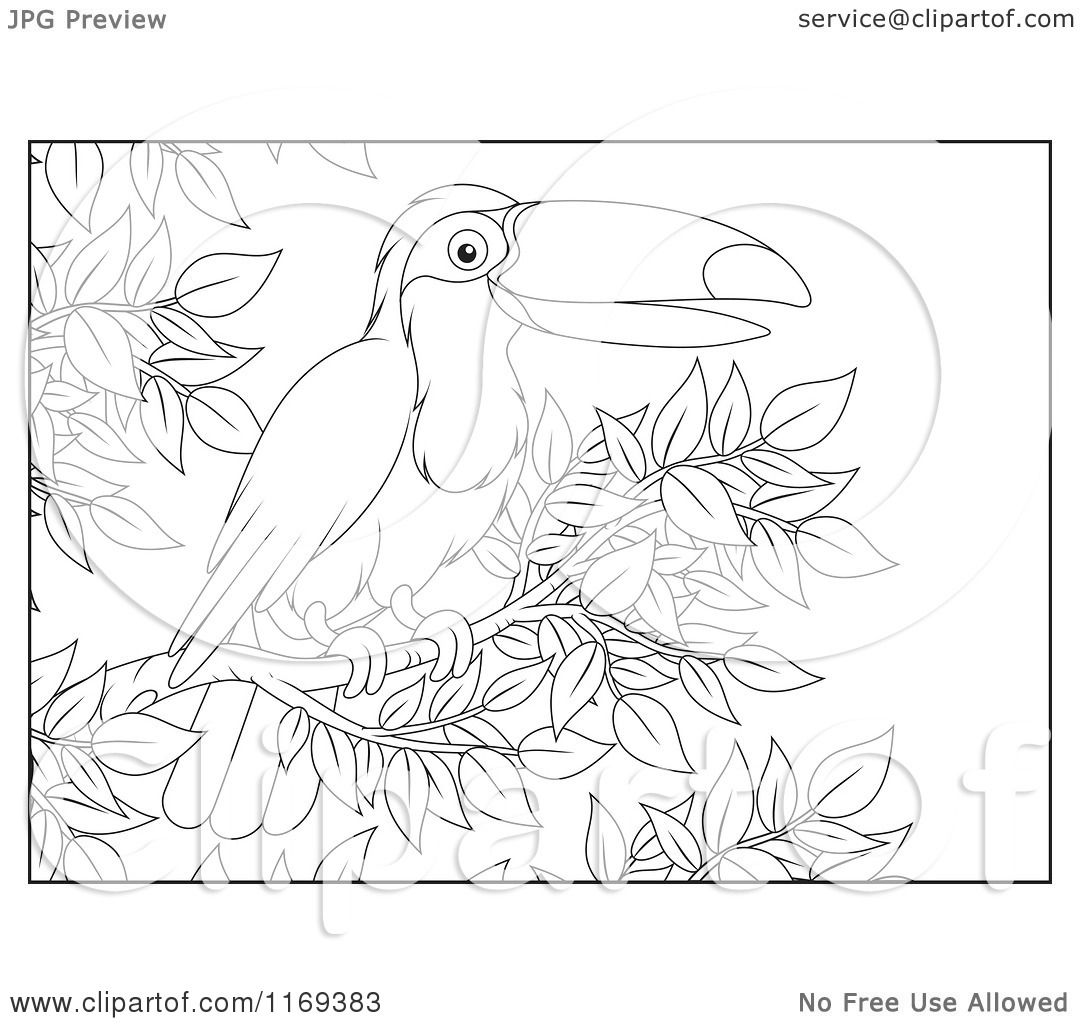 Cartoon Of An Outlined Toucan Bird Perched In A Tree