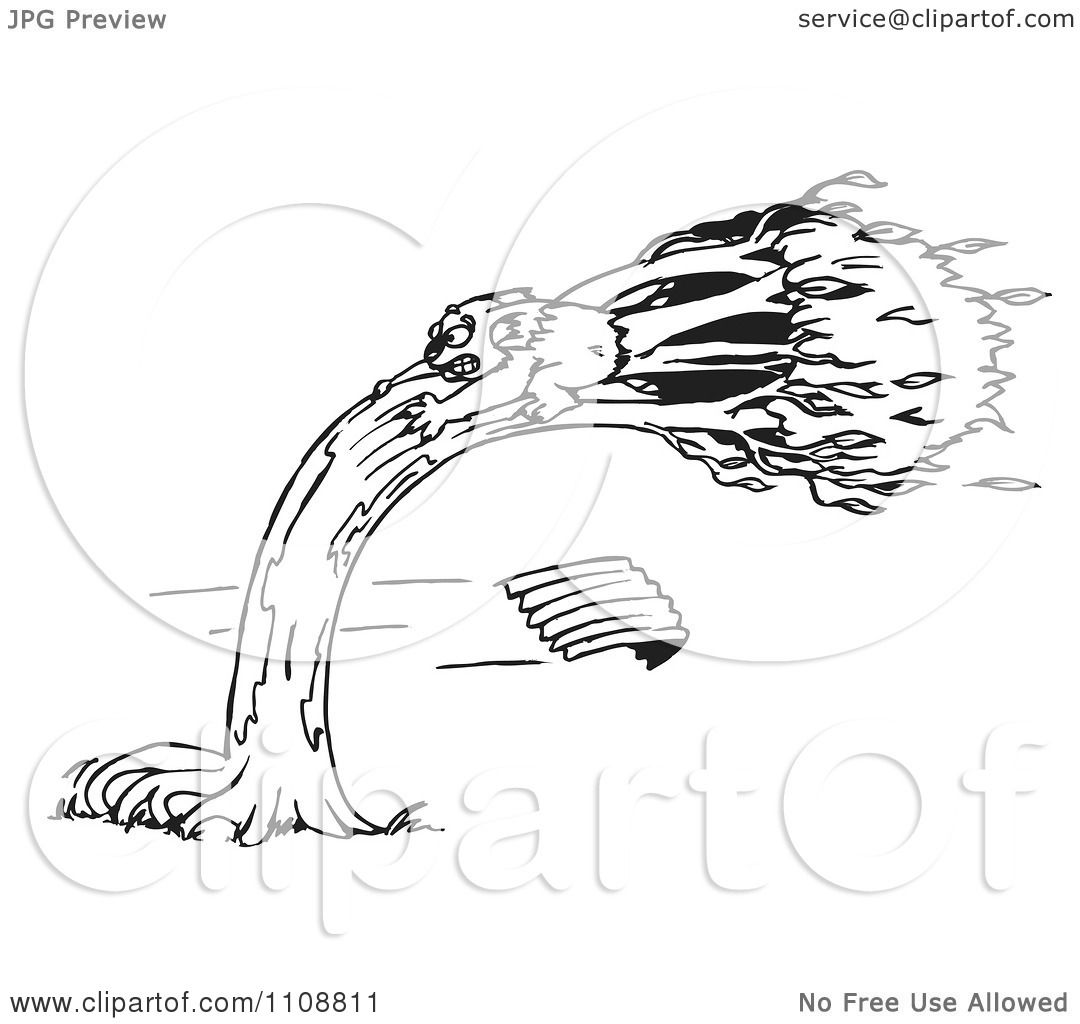 Clipart Black And White Outlined Koala Holding Onto A Tree