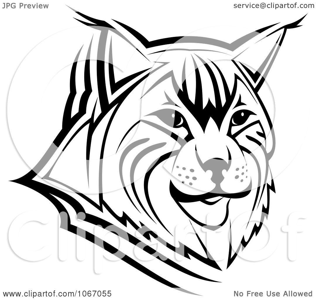 Clipart Bobcat Face