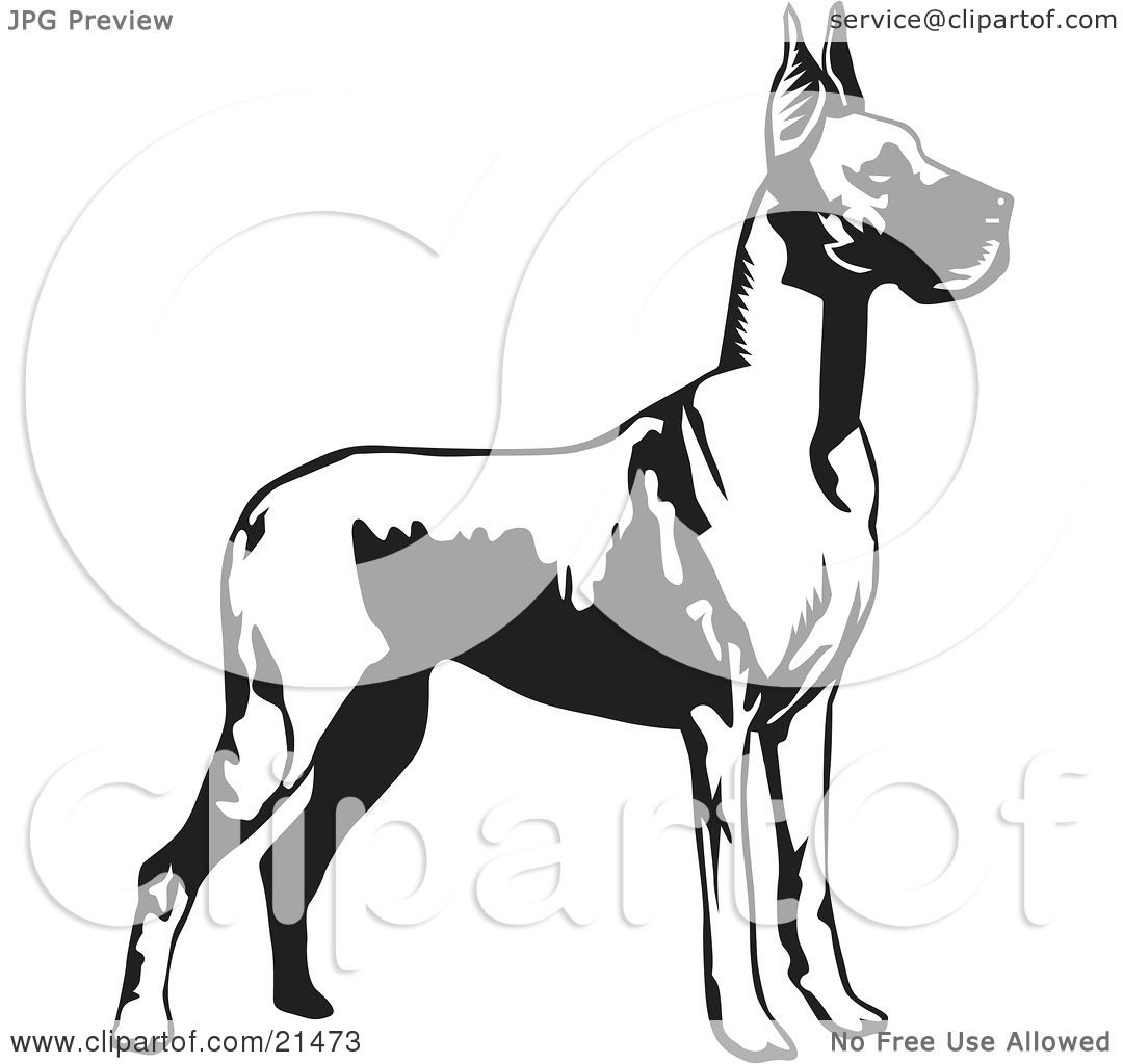 Clipart Illustration Of A Great Dane Dog With Cropped Ears