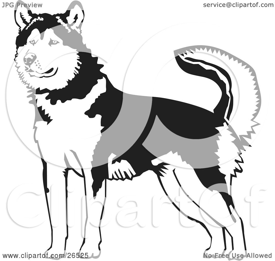 Clipart Illustration Of An Alert Alaskan Malamute Dog