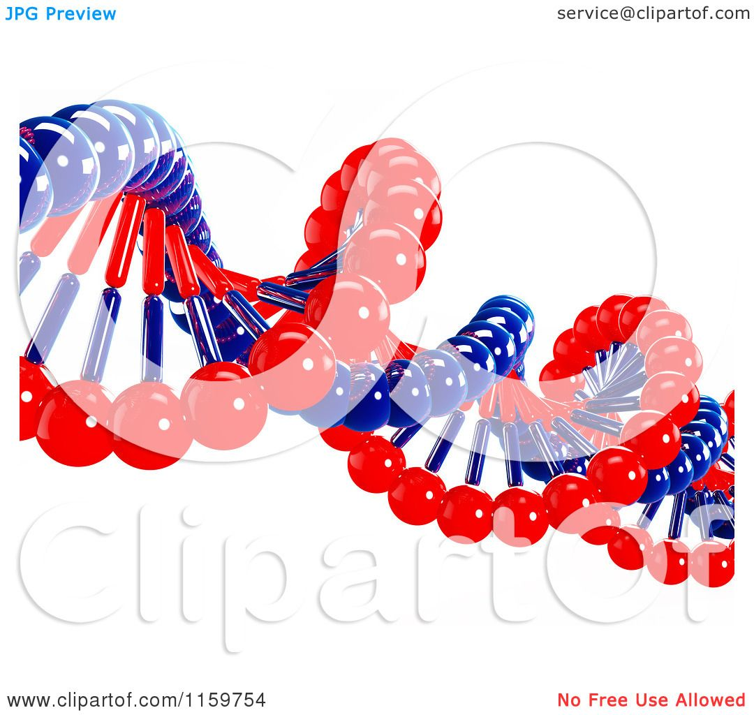 Clipart Of A 3d Red And Blue Double Helix Dna Strand