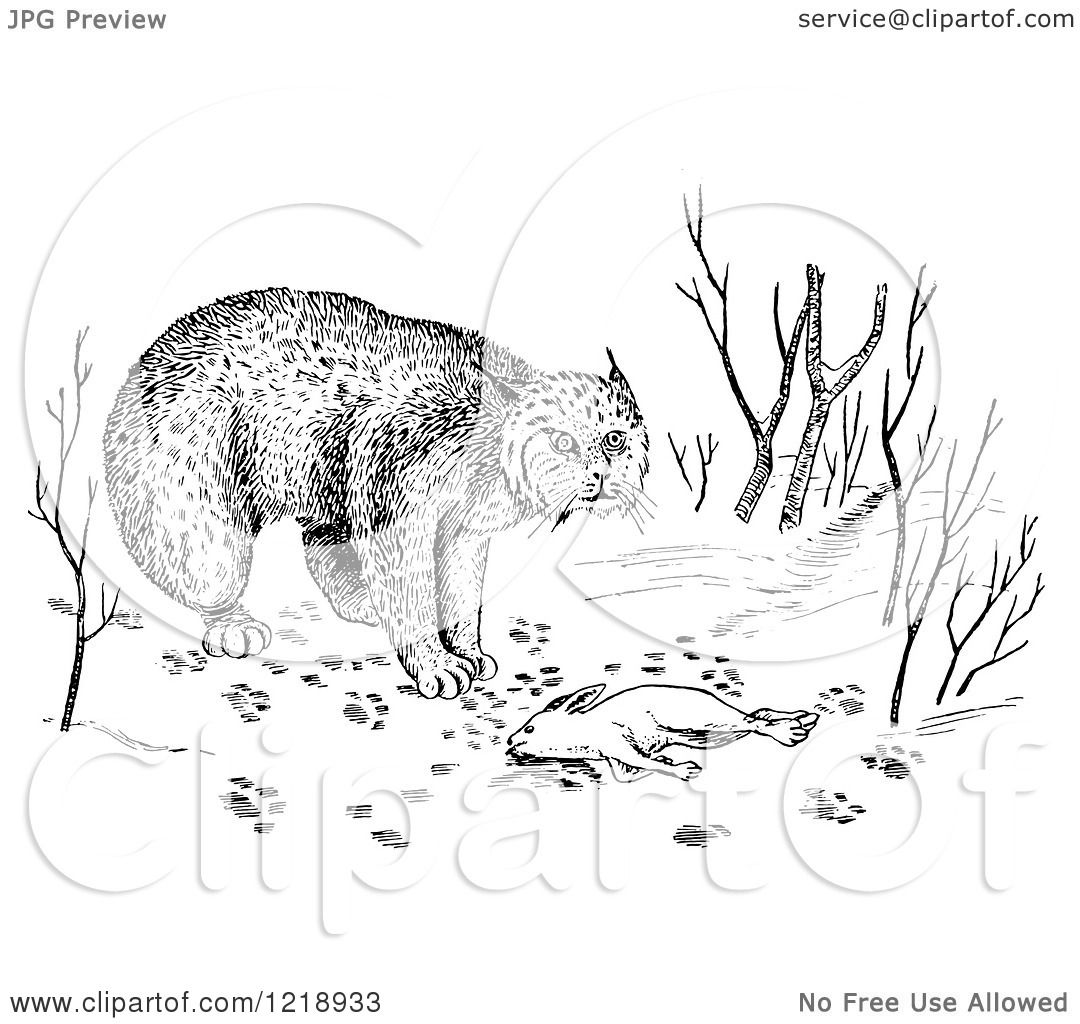 Clipart Of A Black And White Bobcat With Rabbit As Prey