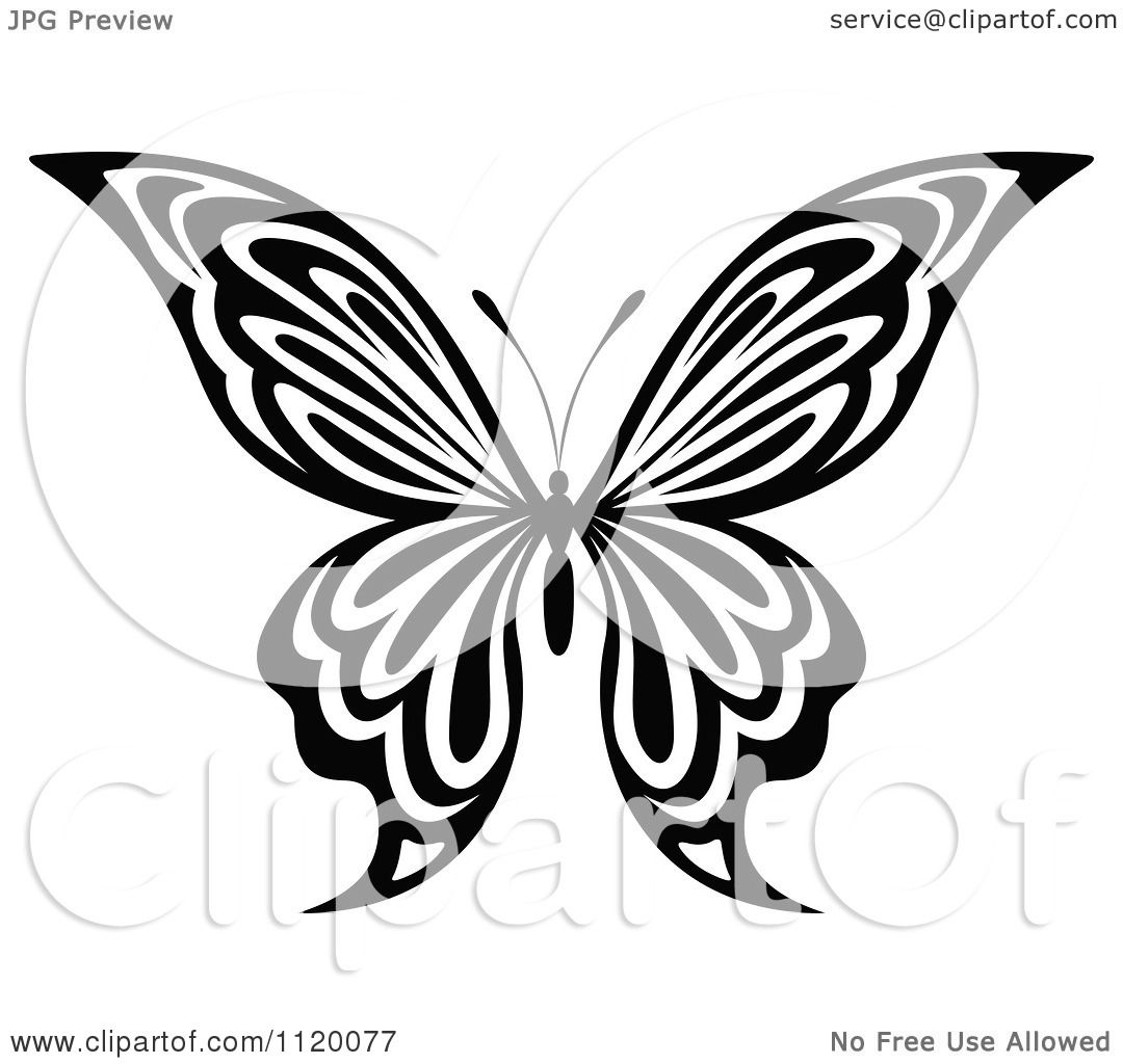 Clipart Of A Black And White Butterfly 14