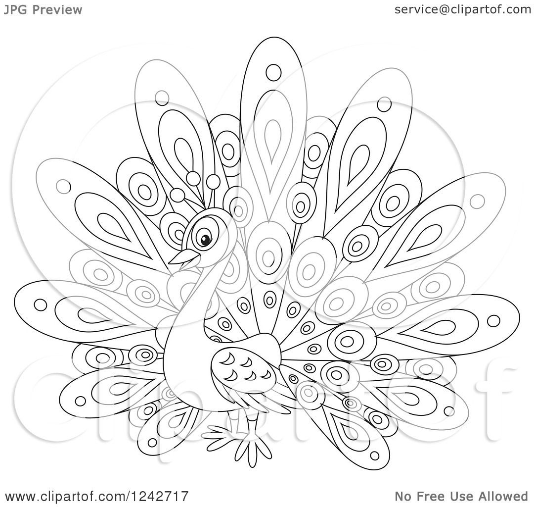 Clipart Of A Black And White Cute Peacock Bird With Fancy