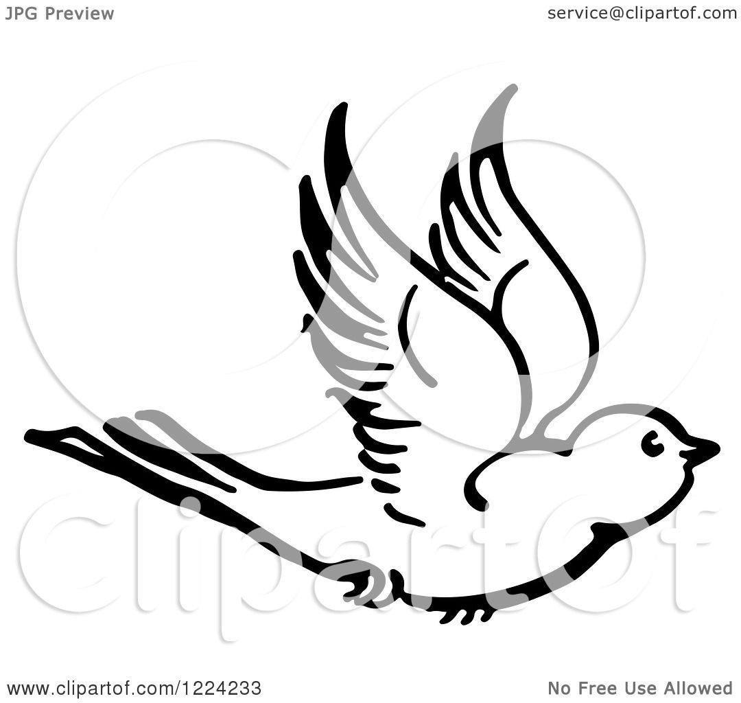 Clipart Of A Black And White Flying Bird