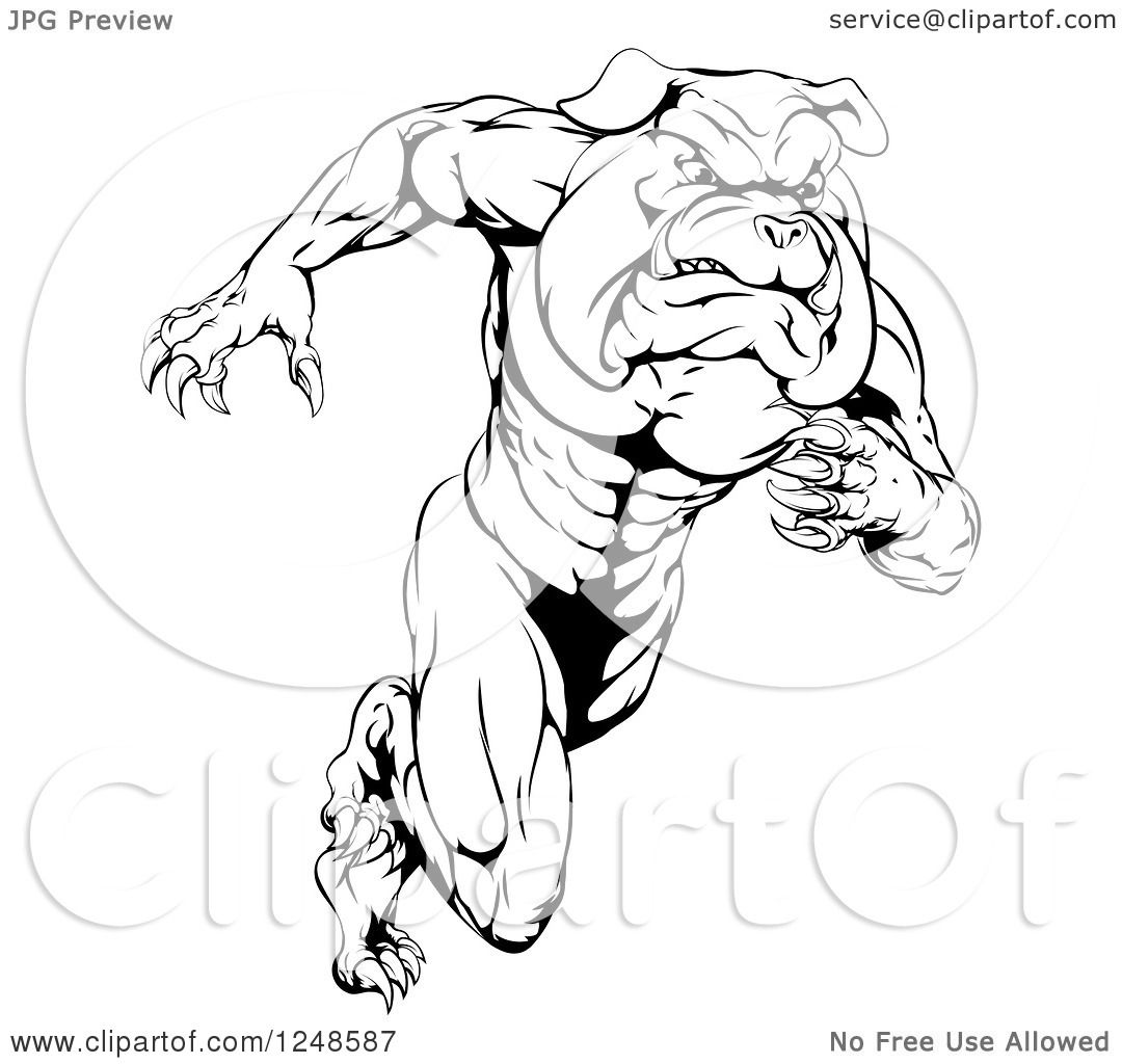 Clipart Of A Black And White Muscular Bulldog Mascot