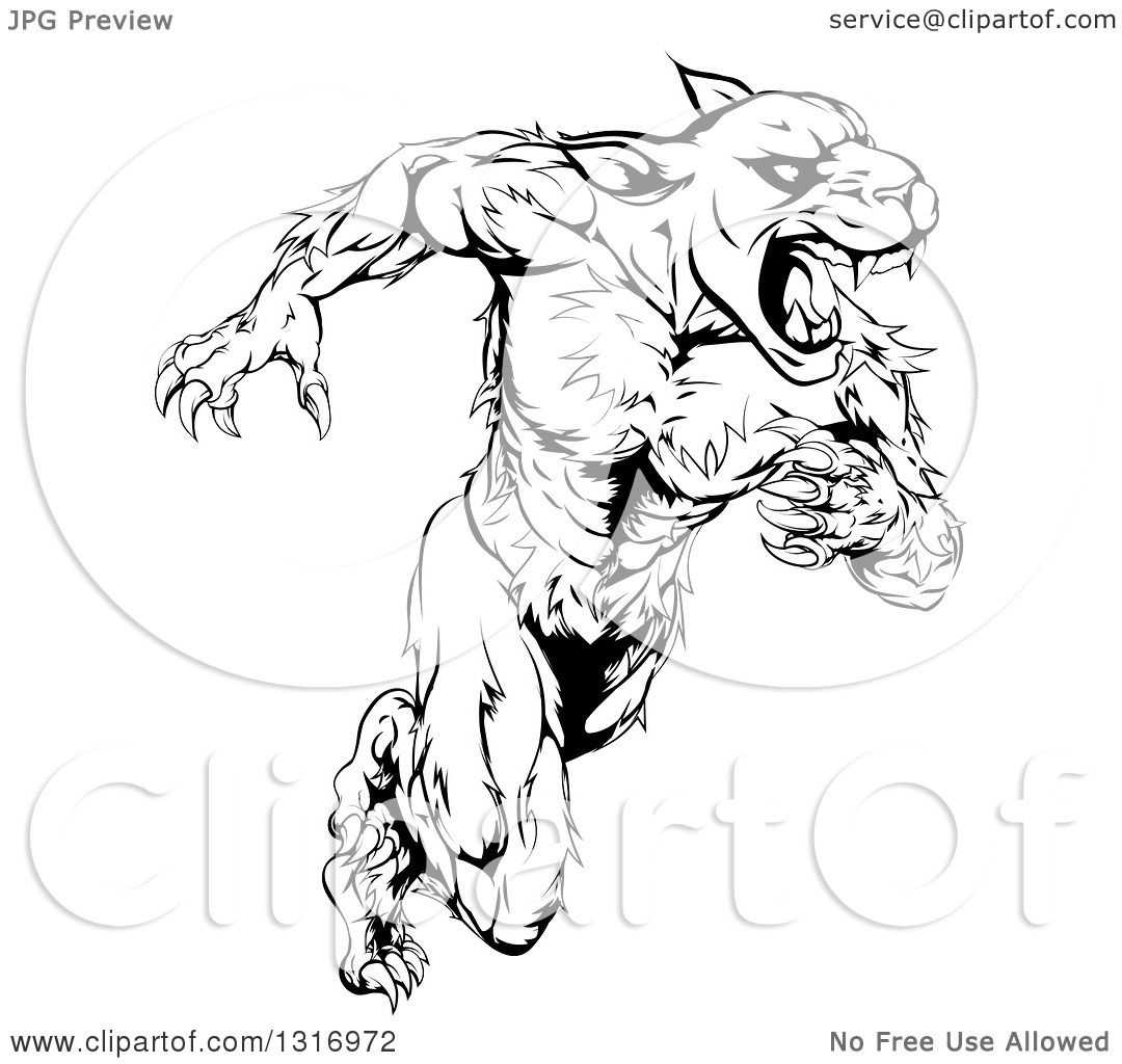 Clipart Of A Black And White Muscular Panther Mascot