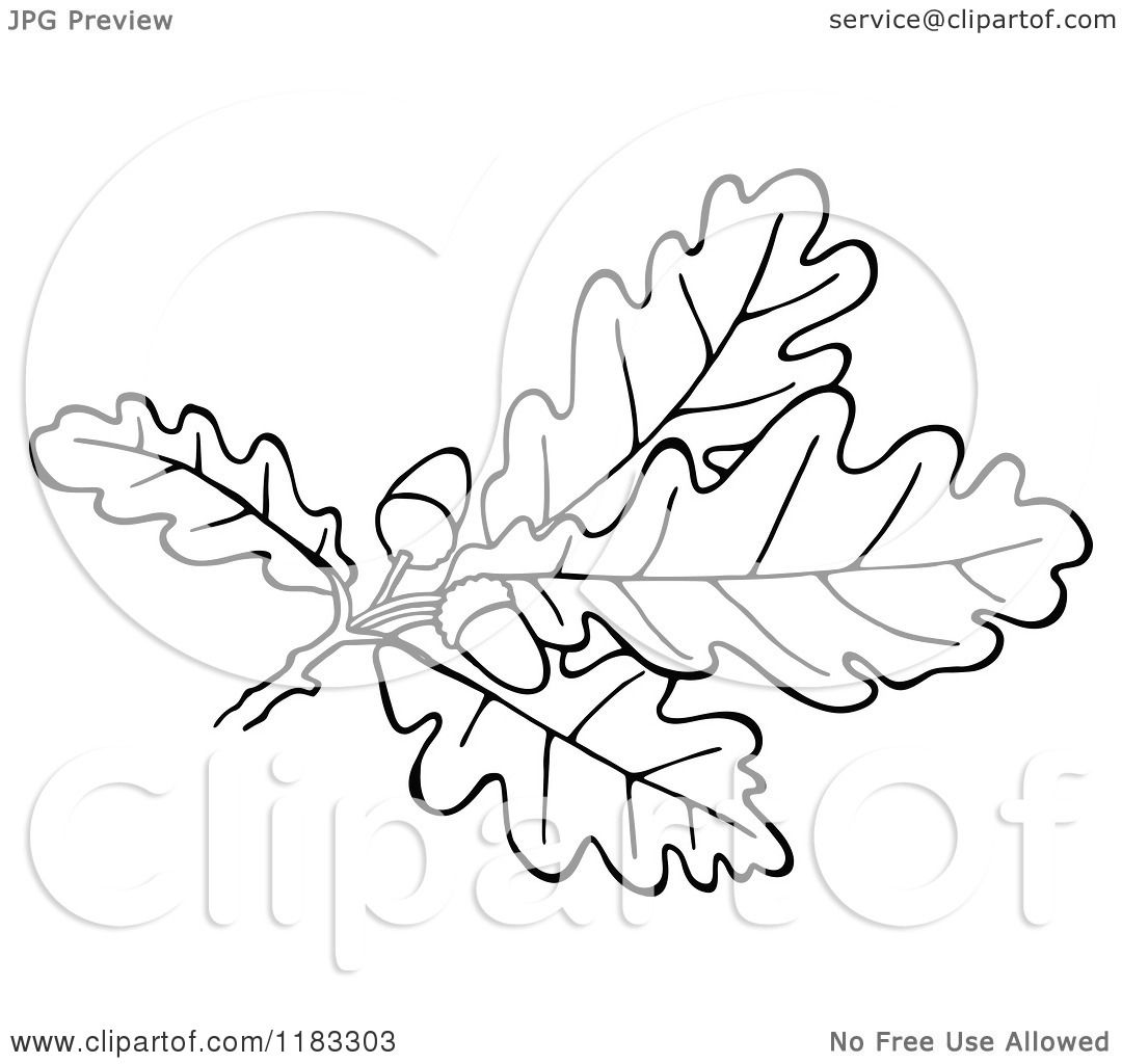 Oak Tree Acorns Diagram