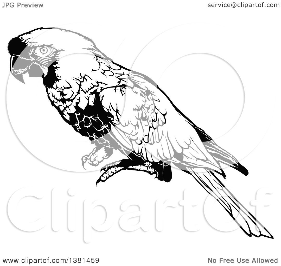 Clipart Of A Black And White Perched Macaw Parrot