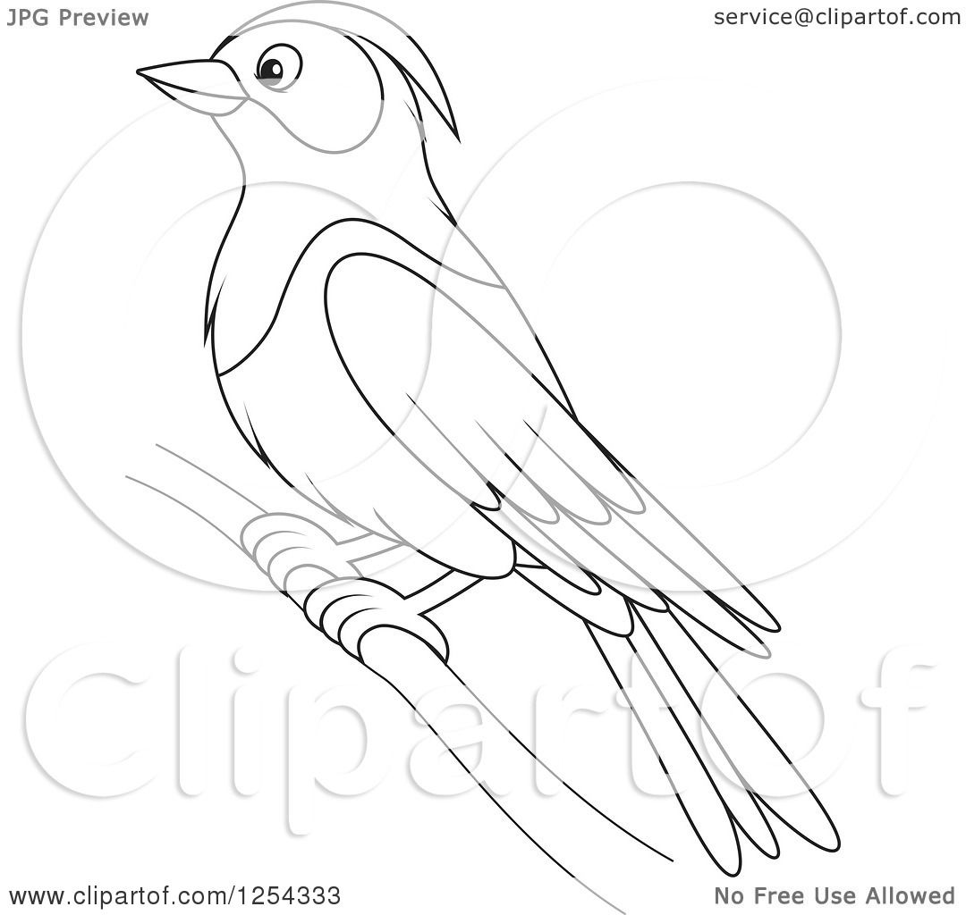 Clipart Of A Black And White Purple Martin Bird