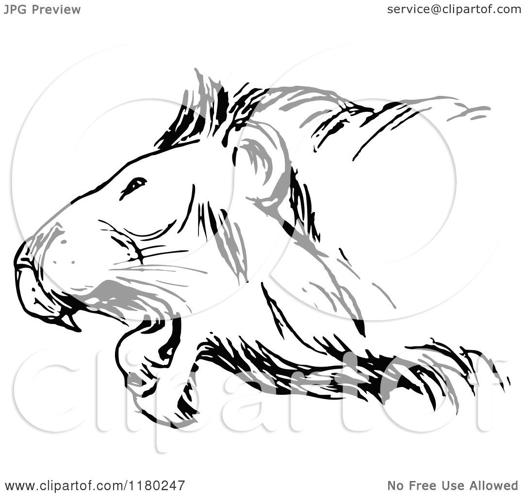 Clipart Of A Black And White Roaring Lion