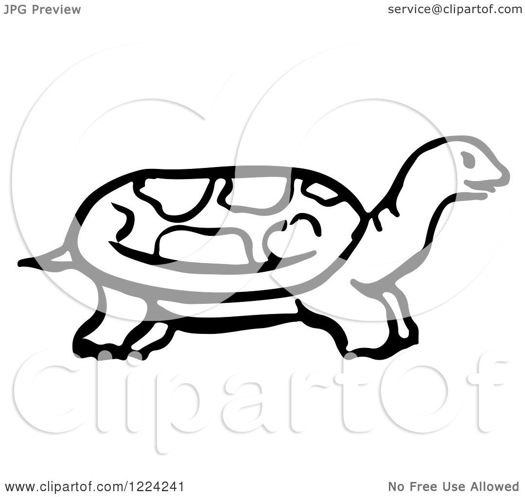 Clipart Of A Black And White Tortoise In Profile