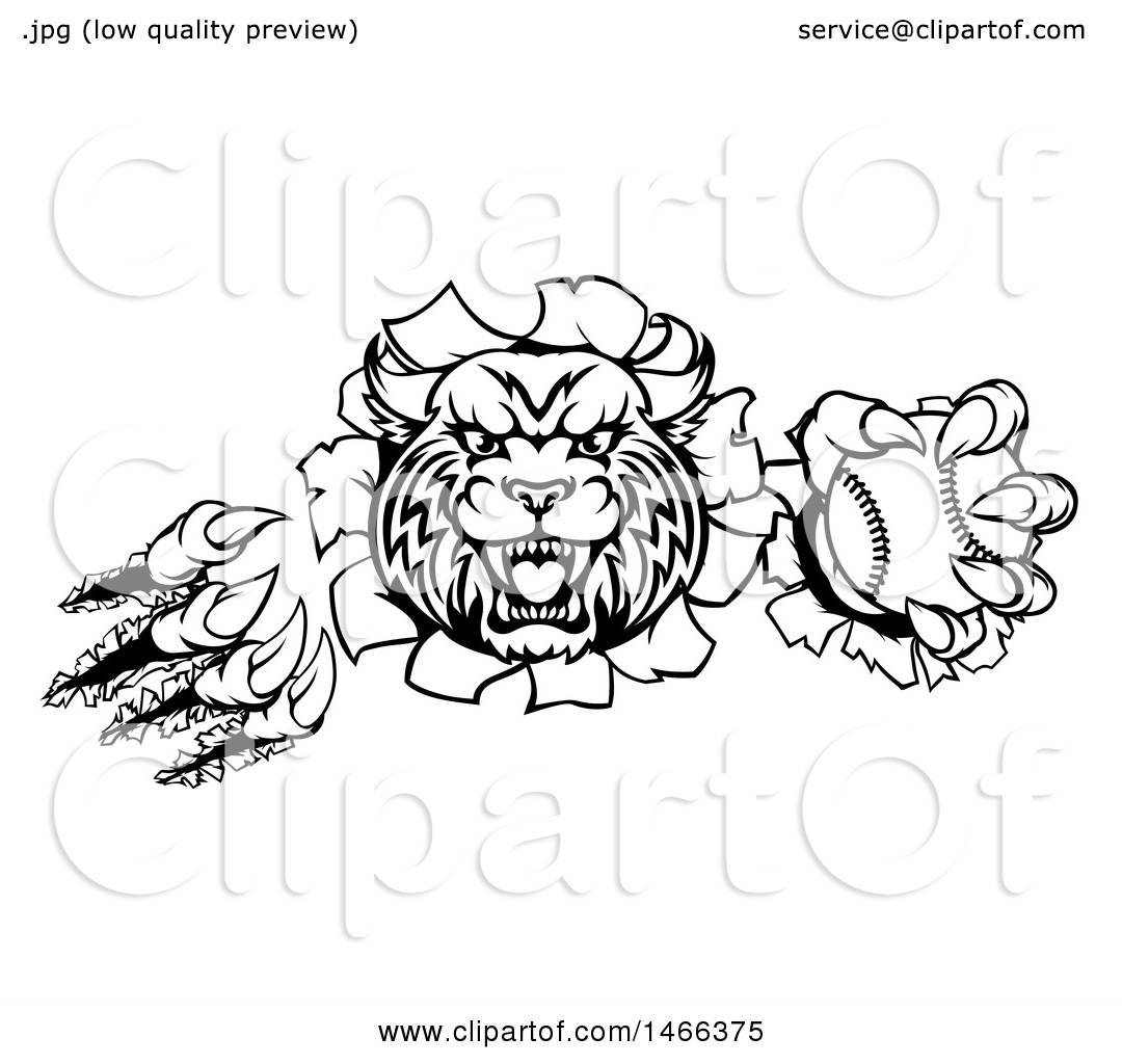 Clipart Of A Black And White Vicious Wildcat Mascot