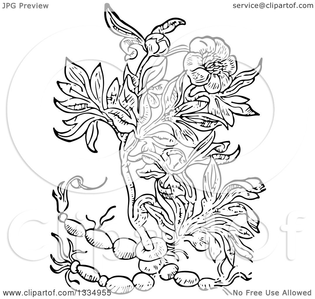 Clipart Of A Black And White Woodcut Herbal Peony Plant
