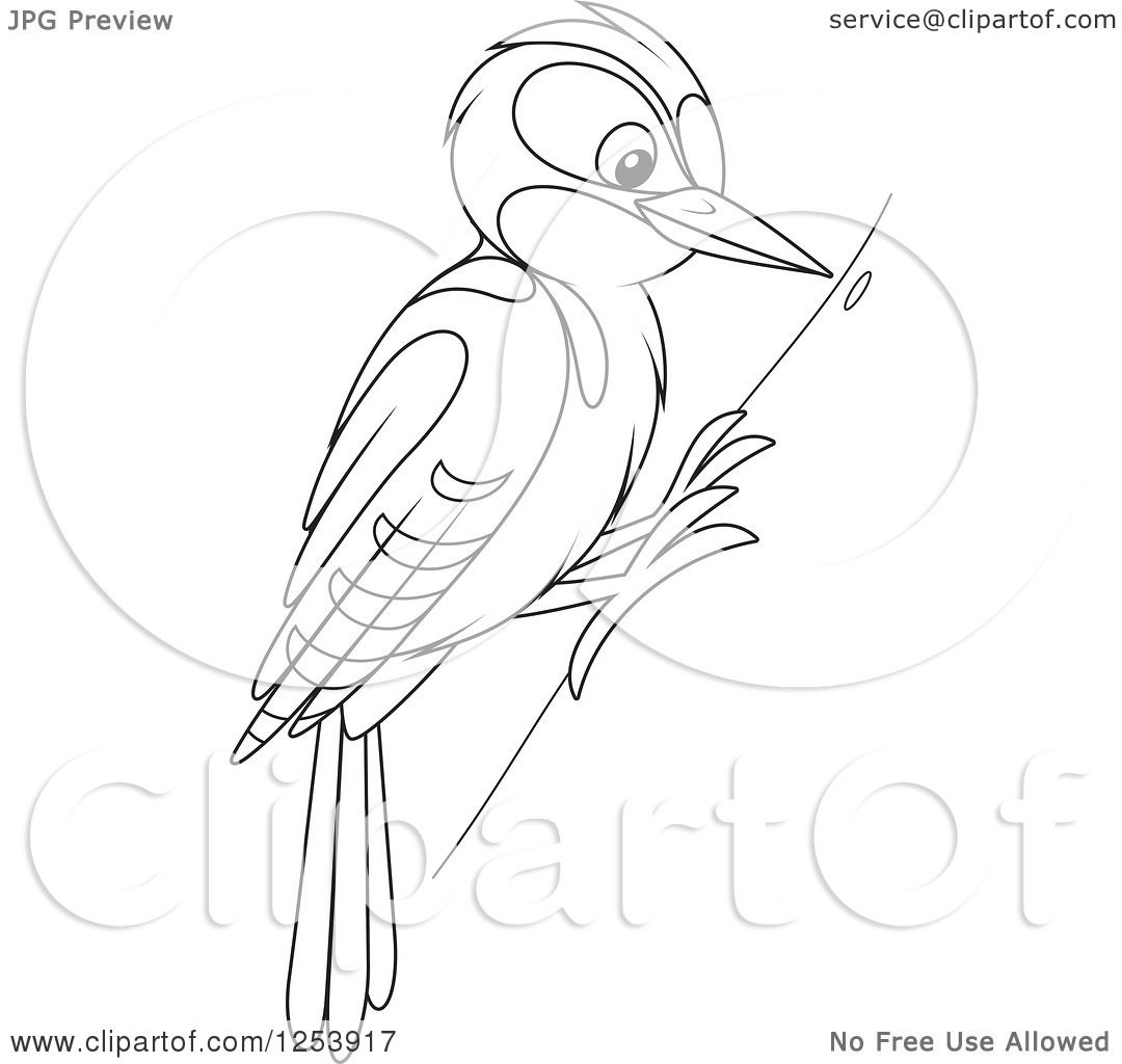Clipart Of A Black And White Woodpecker Bird On A Tree