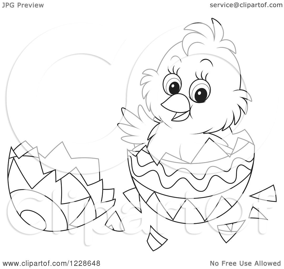 Clipart Of A Cute Black And White Chick Hatching From An