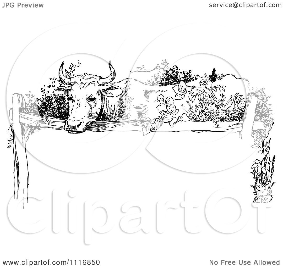 Clipart Of A Retro Vintage Black And White Cow Over