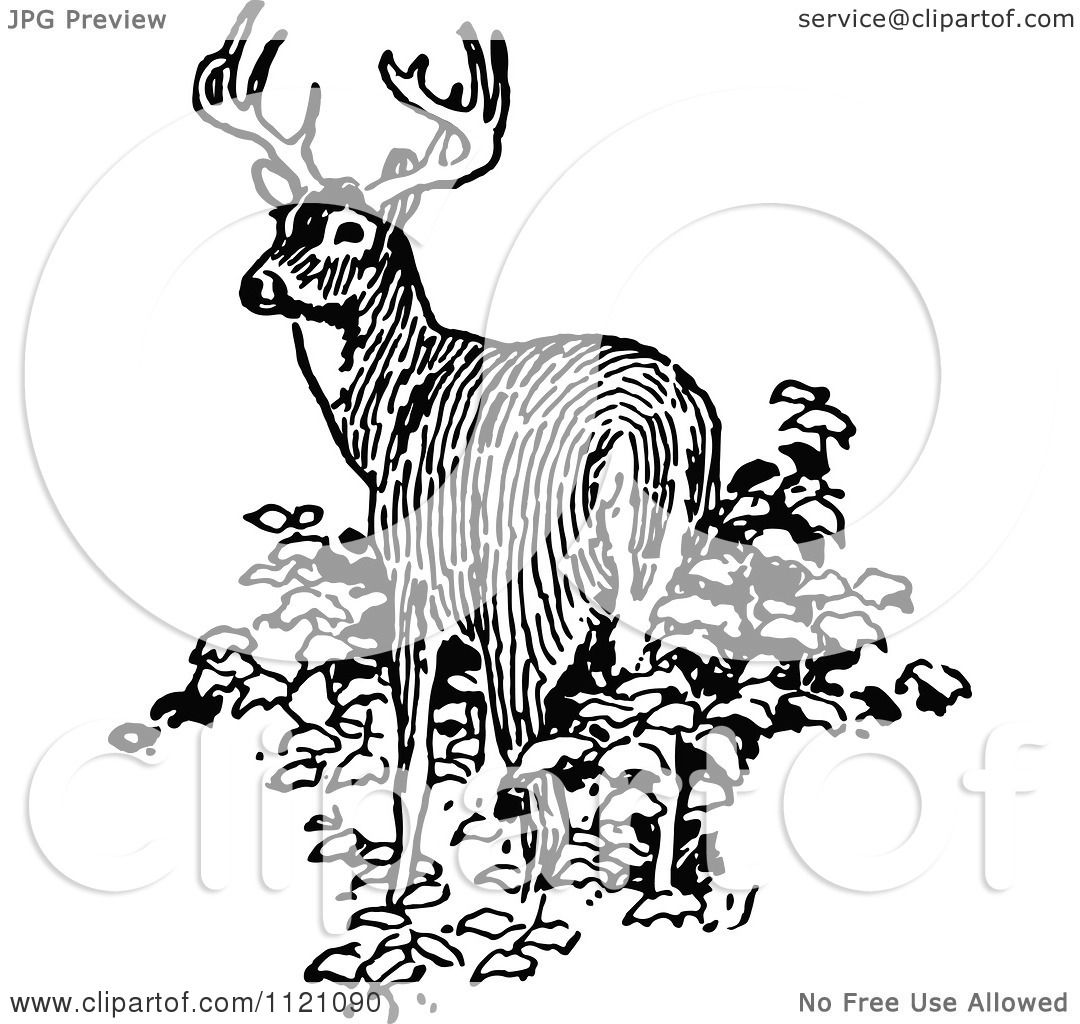 Clipart Of A Retro Vintage Black And White Deer In Bushes