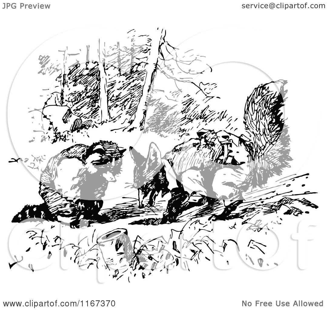 Clipart Of A Retro Vintage Black And White Digging Fox And