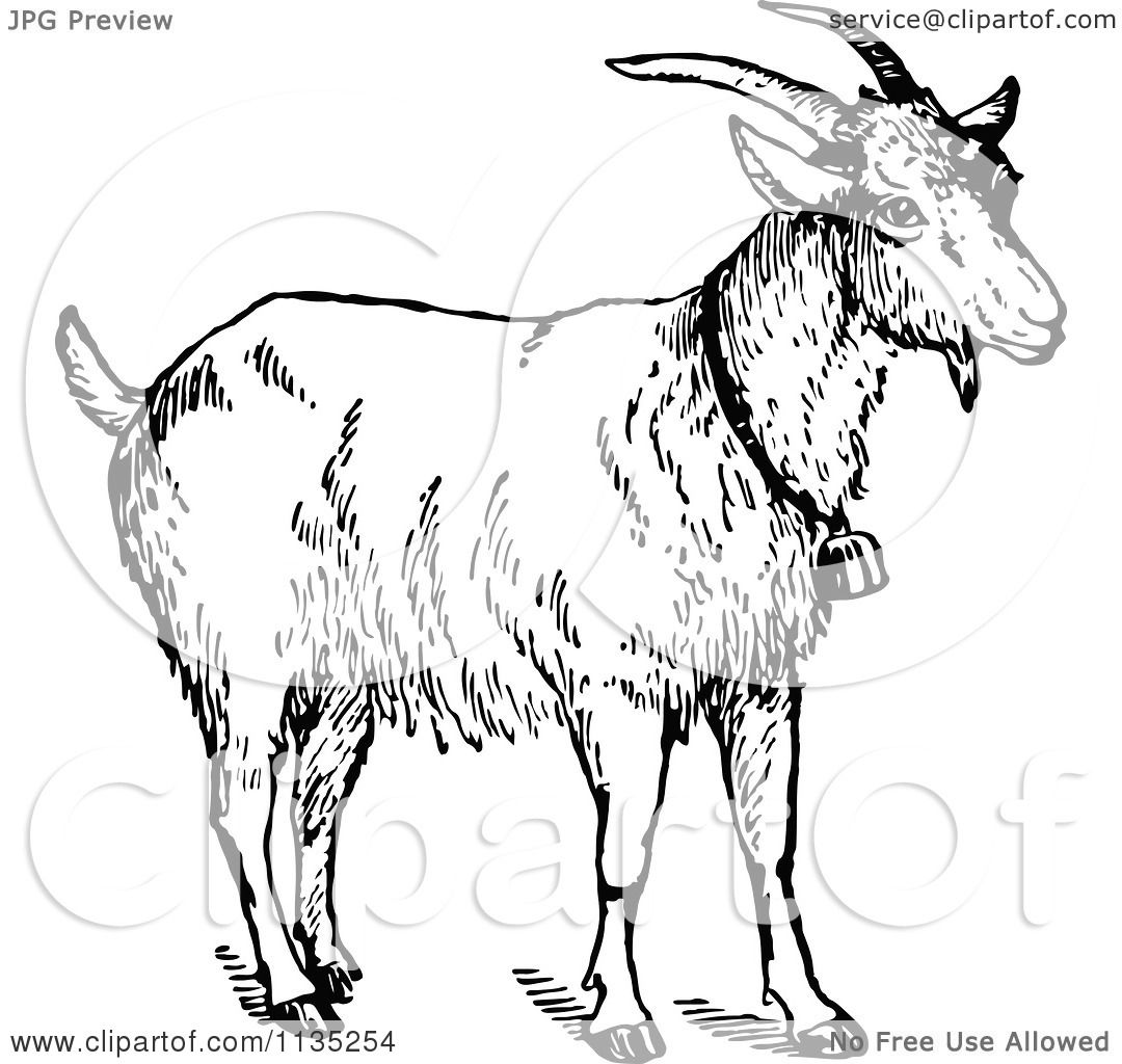 Clipart Of A Retro Vintage Black And White Goat Wearing A