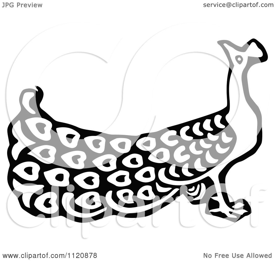 Clipart Of A Retro Vintage Black And White Peacock 1