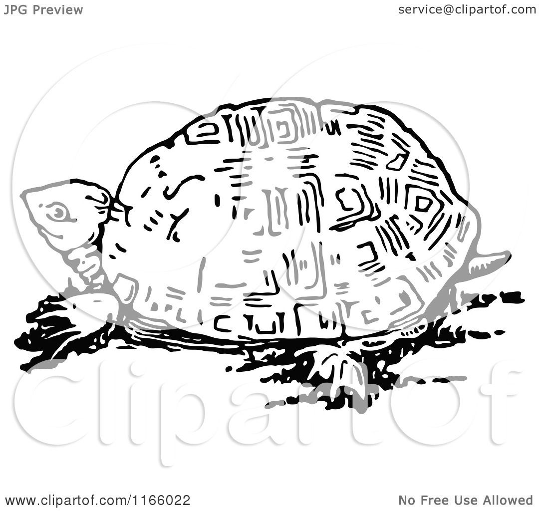 Clipart Of A Retro Vintage Black And White Tortoise
