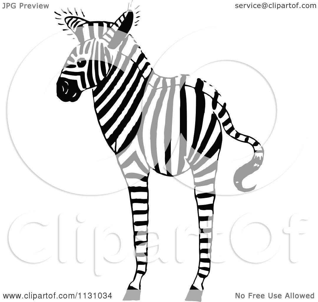 Clipart Of A Retro Vintage Black And White Zebra