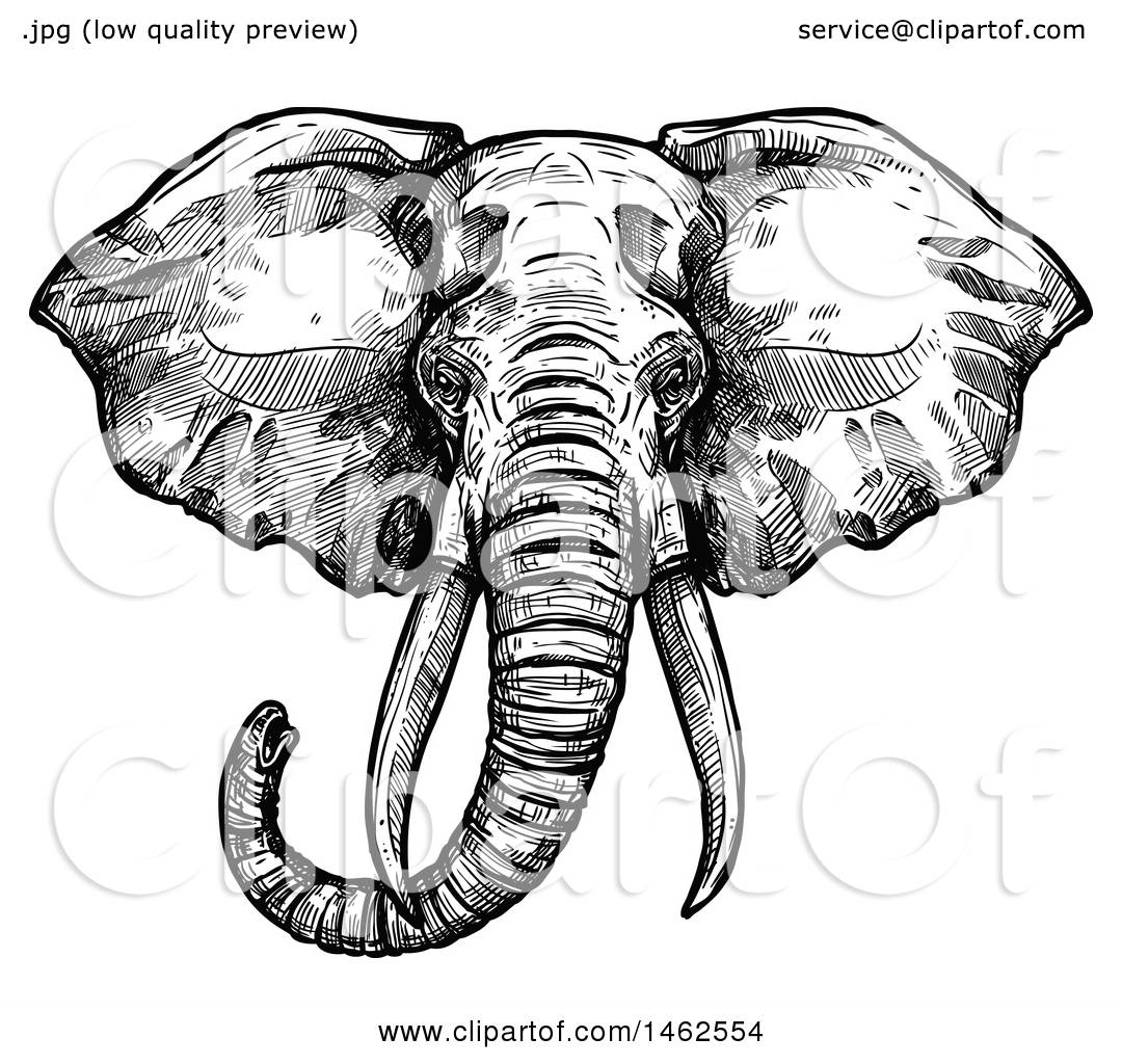 Clipart Of A Sketched Black And White Elephant Head