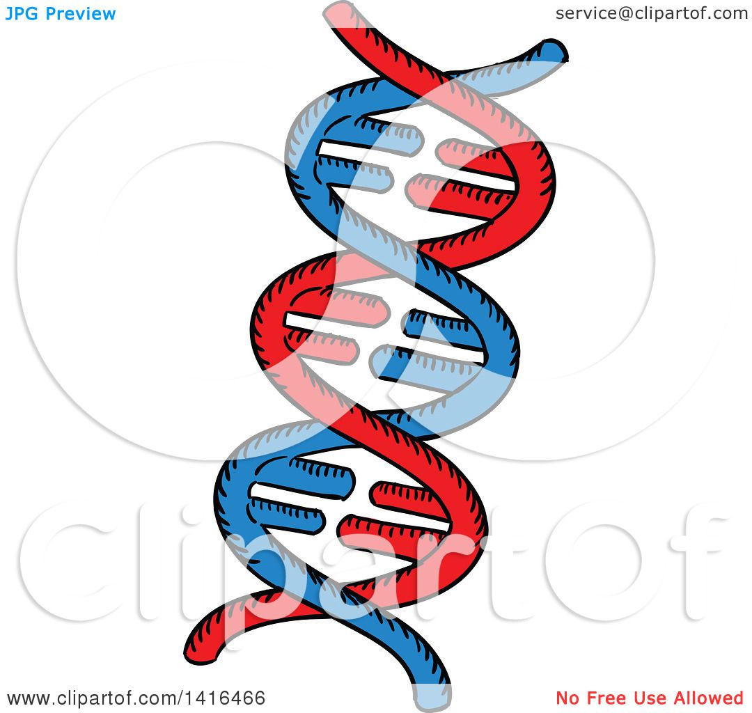 Clipart Of A Sketched Dna Strand