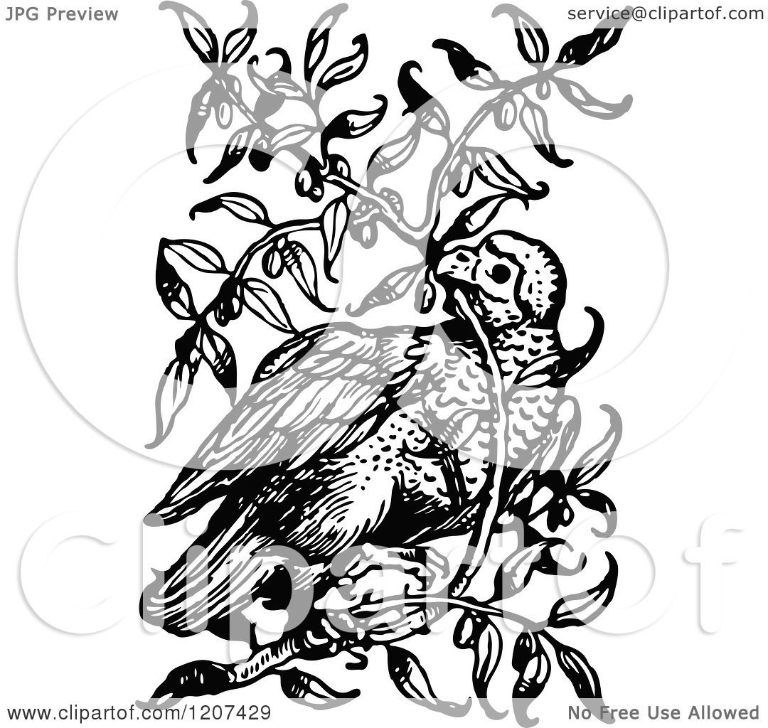 Clipart Of A Vintage Black And White Bird In A Bush