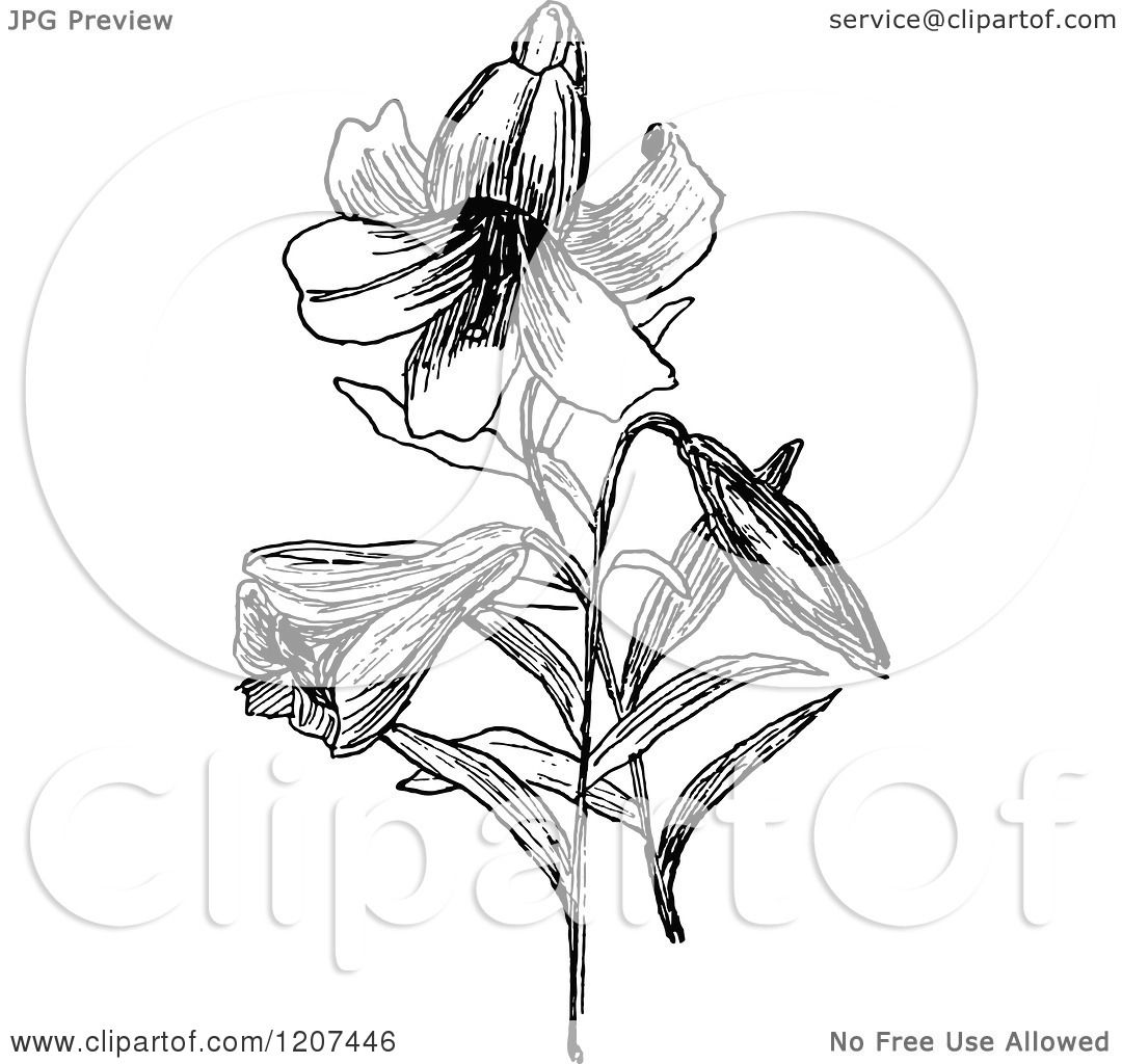 Clipart Of A Vintage Black And White Easter Lily