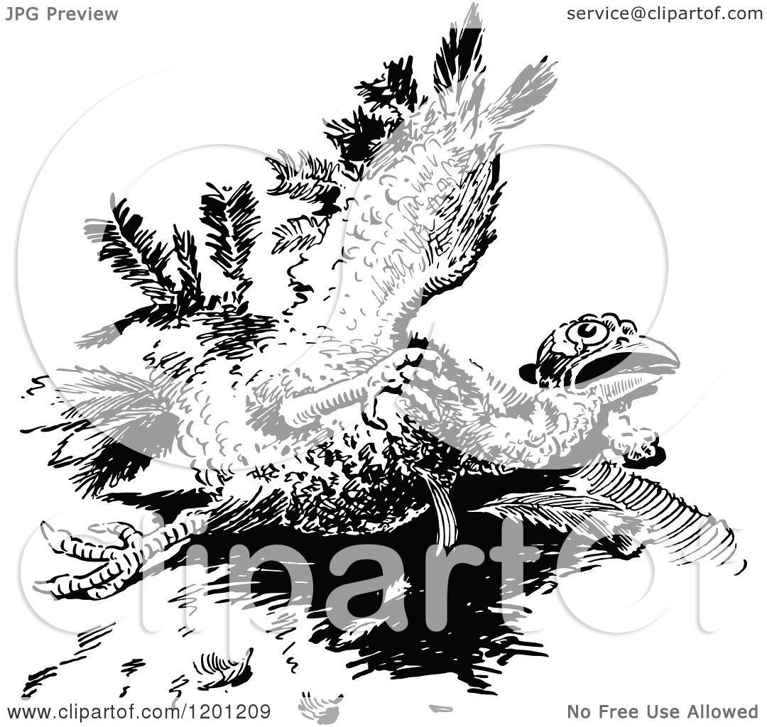 Clipart Of A Vintage Black And White Injured Turkey Bird