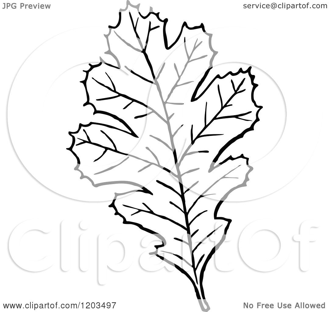 Clipart Of A Vintage Black And White Leaf