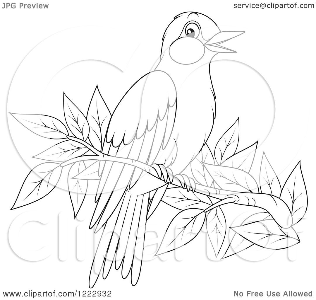 Clipart Of An Outlined Oriole Bird Perched On A Branch