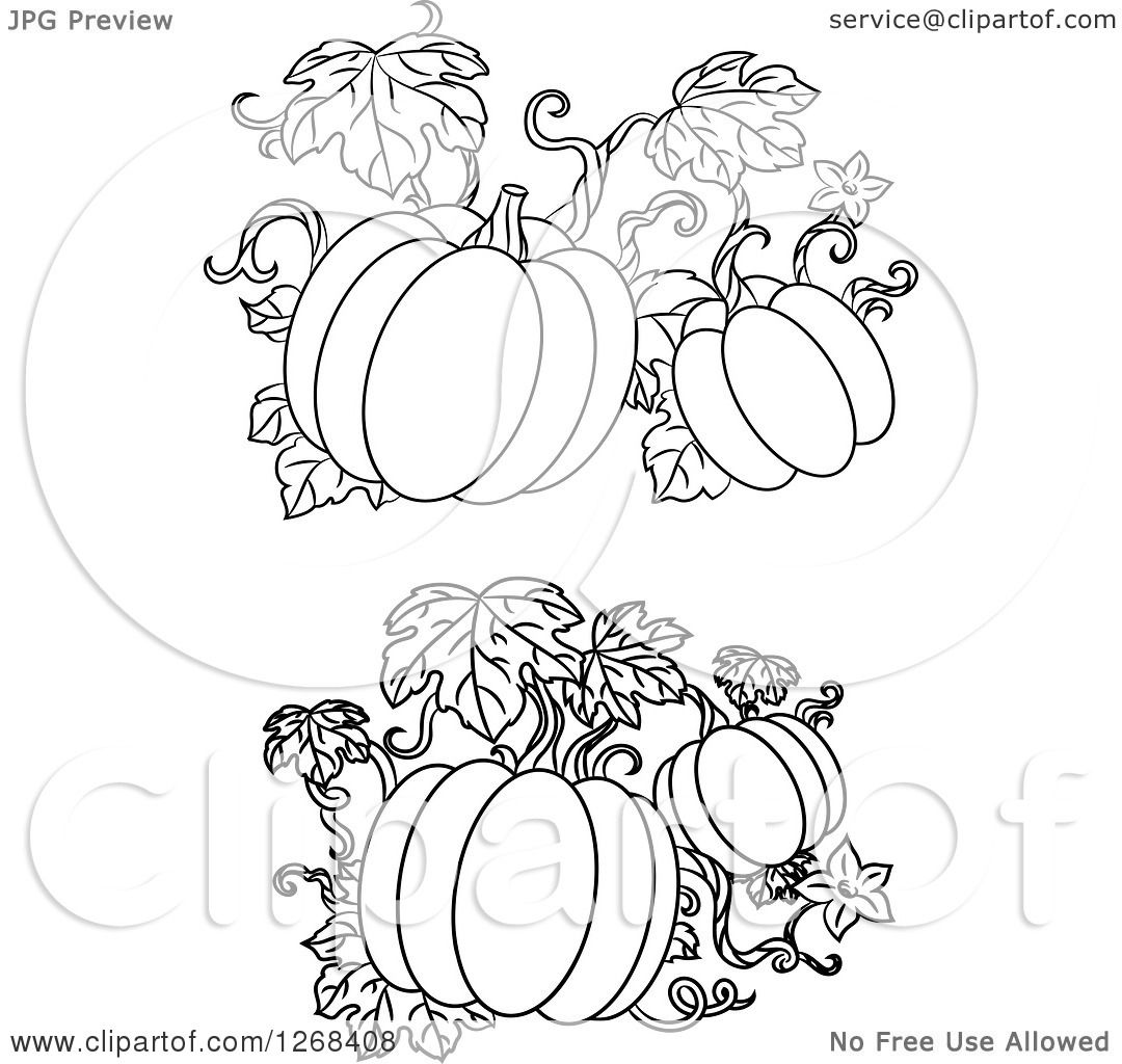 Clipart Of Black And White Pumpkin Vines