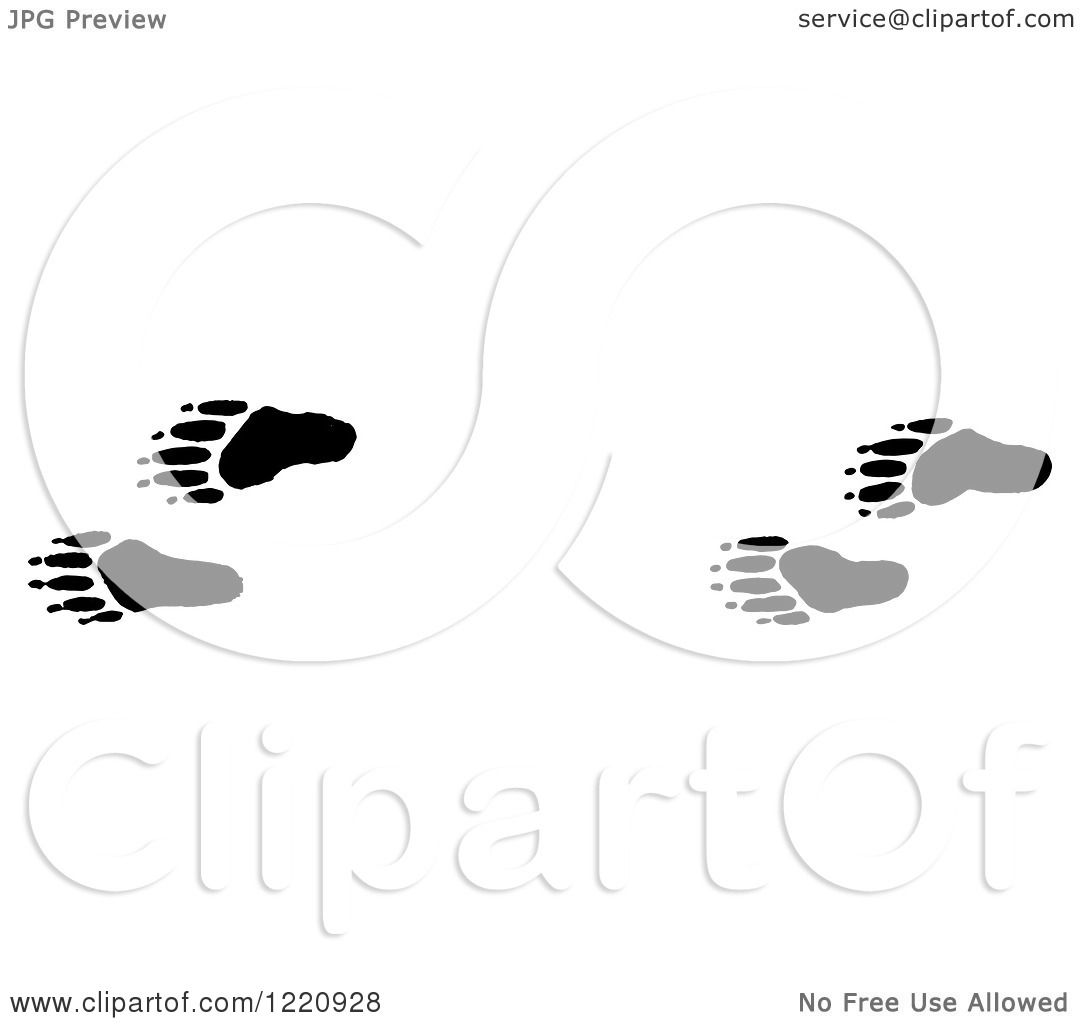 Clipart Of Black And White Raccoon Tracks