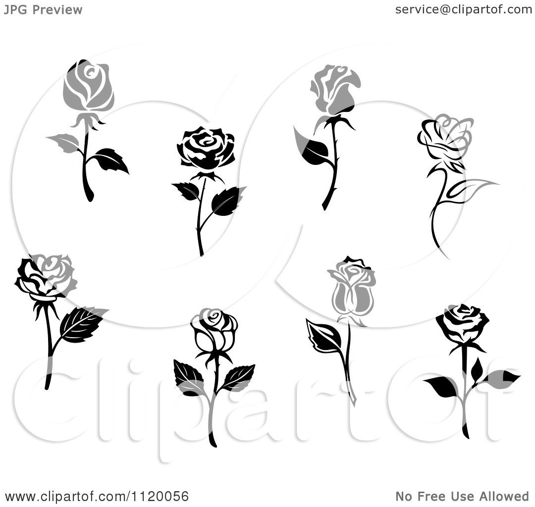 Clipart Of Black And White Rose Flowers