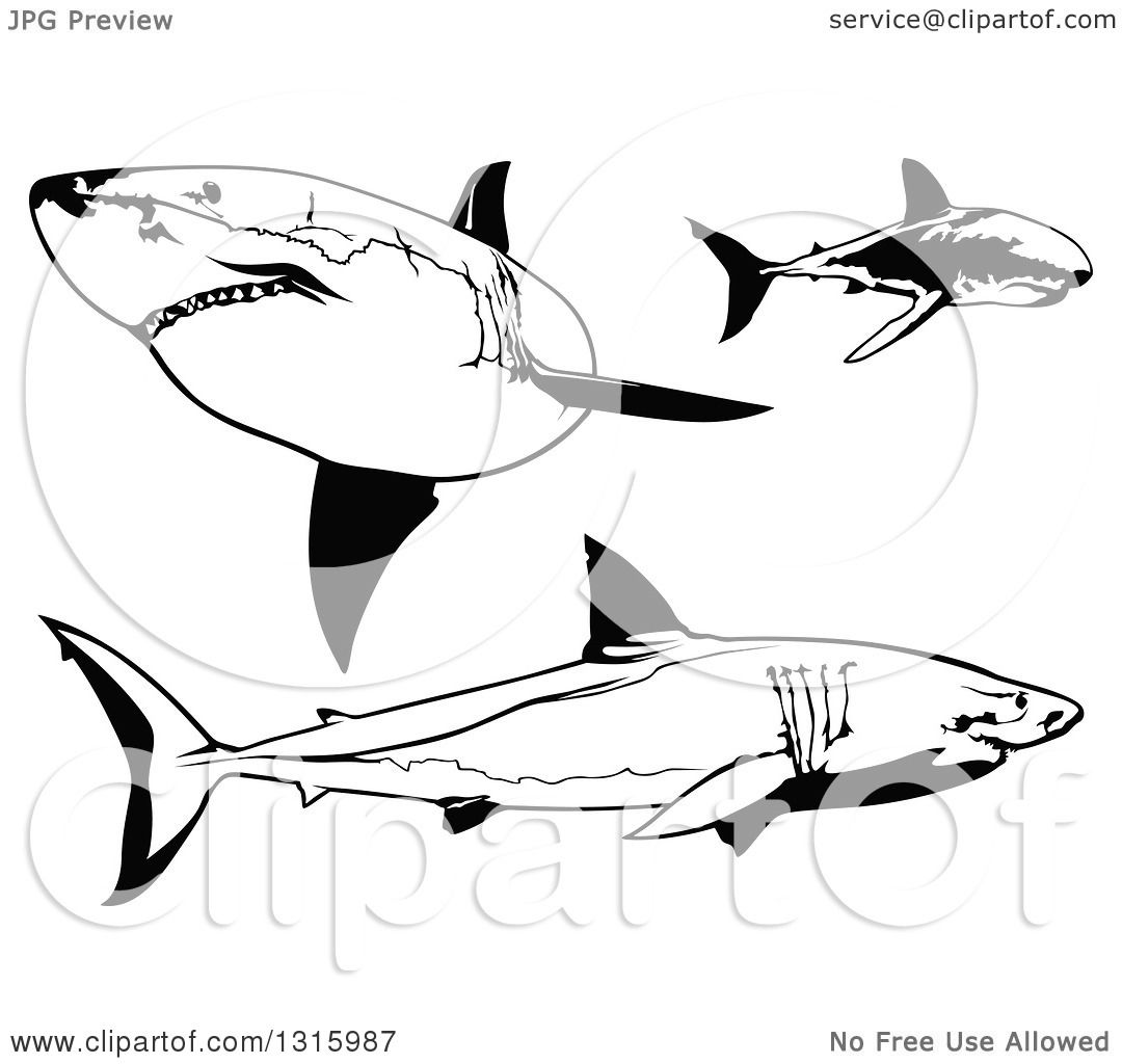 Clipart Of Black And White Swimming Great White Sharks