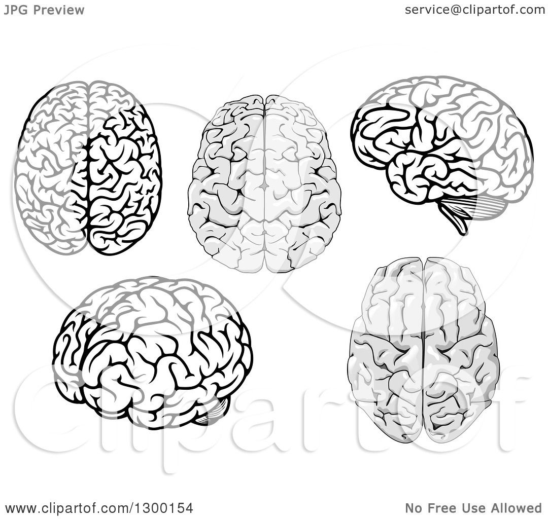 Clipart Of Grayscale And Black And White Brains
