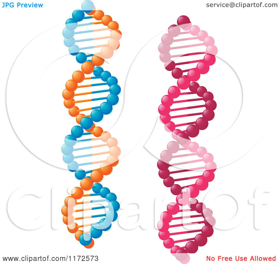 Clipart Of Pink And Orange And Blue Dna Strands