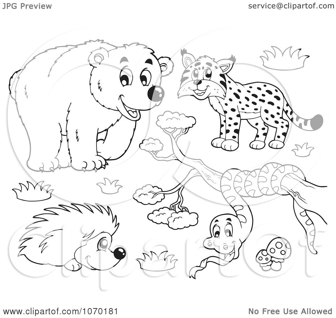 Clipart Outlined Bear Bobcat Hedgehog And Snake
