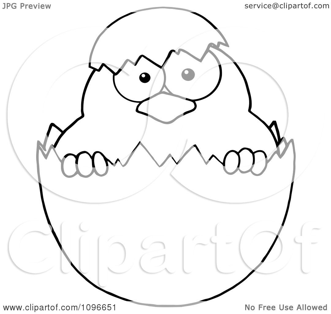 Clipart Outlined Easter Chick In A Shell