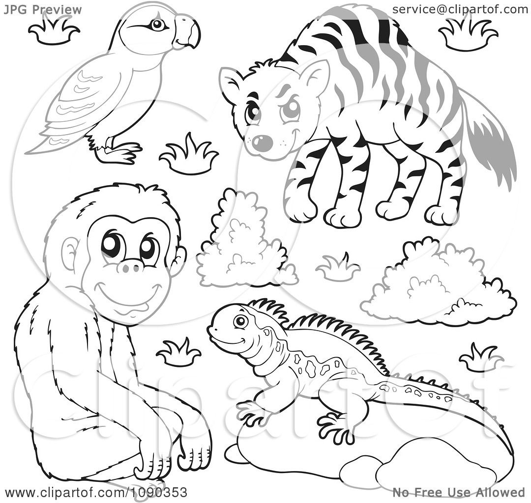 Clipart Outlined Puffin Monkey Lizard And Hyena Zoo