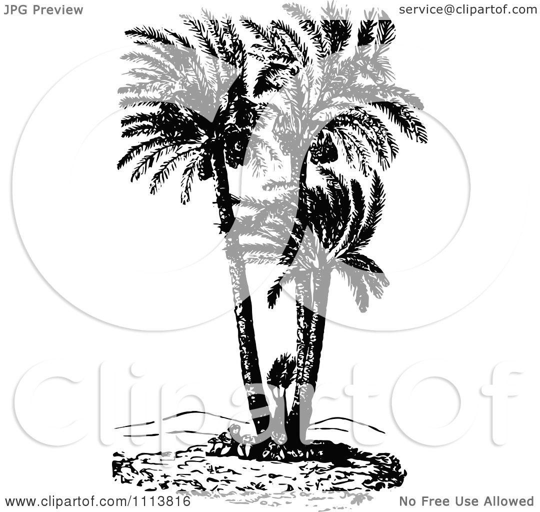 Clipart Retro Black And White Doum Palm Tree