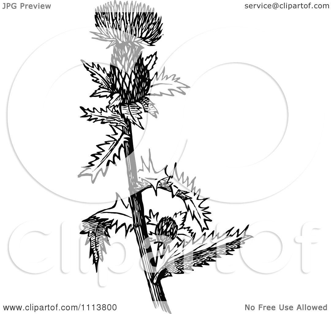 Clipart Retro Black And White Thistle Bud